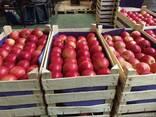 Яблоки из Польши! - фото 6