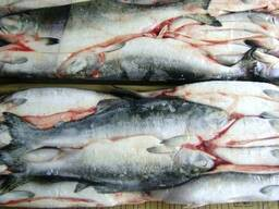 Дальневосточная замороженная рыба - photo 5