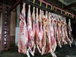 Гӯшти гов бык ва корова бо Украина - photo 3