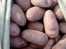 Картофель - фото 2