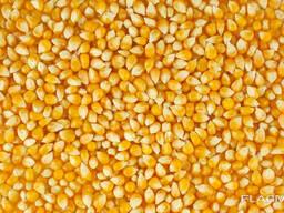 Кукуруза фуражная, пшеница, отруби пшеничные