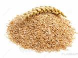 Кукуруза фуражная, пшеница, отруби пшеничные - photo 3