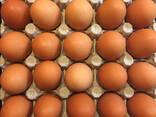 Куриные яйца - фото 3