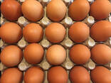 Куриные яйца - photo 3