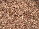 Álnus glutinósa , Семена ольхи, ольха семена, ольха черная семена, семена ольхи клейкой - photo 7