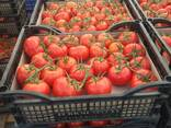 Pomidor - фото 4