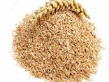 Пшеница мягкая, пшеница твердая - фото 2