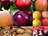 Саженцы сортов плодовых деревьев - photo 1