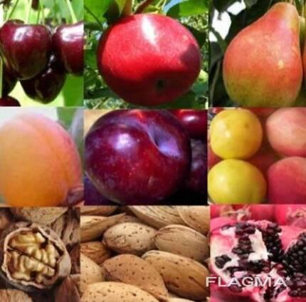 Саженцы сортов плодовых деревьев