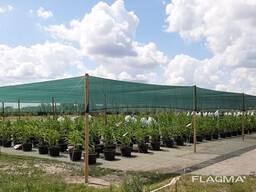 Теневая сетка - защита от непогоды для агроплощадок - фото 4