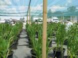 Теневая сетка - защита от непогоды для агроплощадок - фото 6